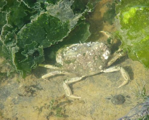 waddenzee actief in de natuur